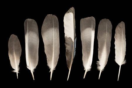 Gray feathers on a black background Standard-Bild