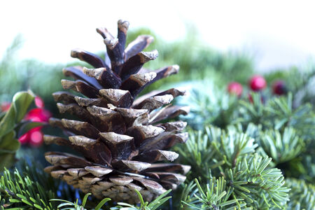 pinecone: Pinecone close up at the pine branch