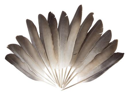 feather: Plumas de la paloma sobre un fondo blanco Foto de archivo