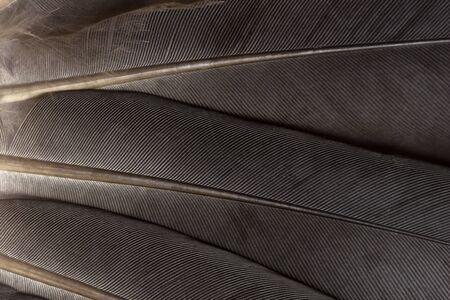pluma: Plumas de la paloma de cerca