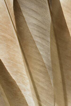 close up: Transparent pigeon feathers close up