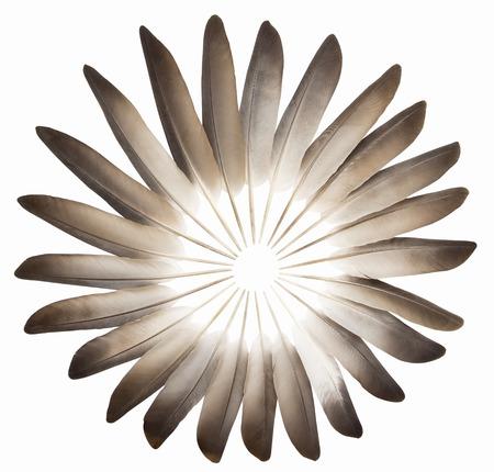 Pigeon feathers background Standard-Bild