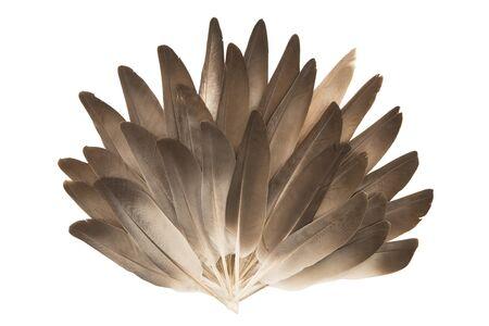 pluma: Abanico de las plumas grises