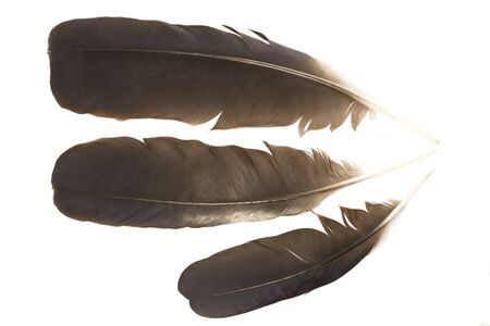 Black raven feathers isolated