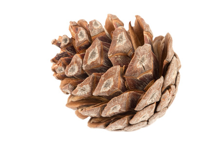 pine cone: Pine cone close up isolated Stock Photo