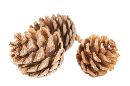 pine three: Three pine cones close up Stock Photo
