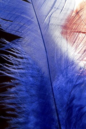 Blue feather texture close up