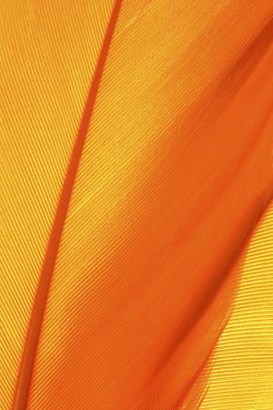 オレンジの羽のテクスチャーをクローズ アップ 写真素材