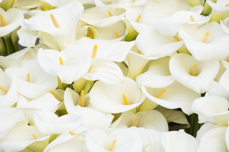 Bouquet of the calla lilies