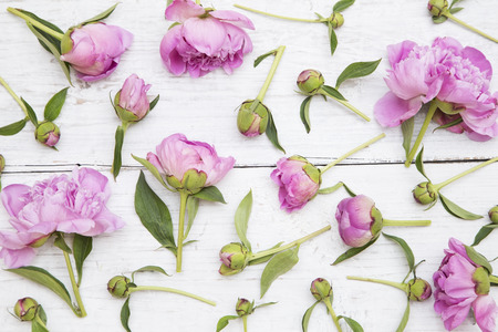 Pink peonies on white  wooden background