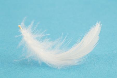 青色の背景に白い羽