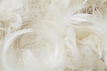 白い羽の背景 写真素材