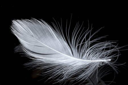 piume bianche su sfondo nero
