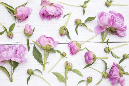 moda: peônias cor de rosa sobre fundo de madeira branca Banco de Imagens