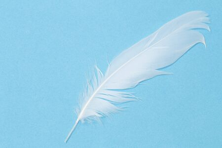 ultramarine blue: White feather on a blue background