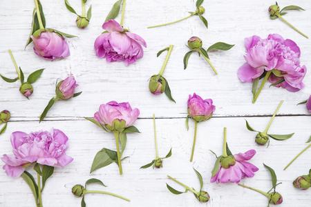 Peonie rosa su sfondo bianco in legno Archivio Fotografico - 54954434