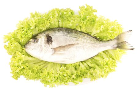 sparus: Dorade fish on a lettuce leaf
