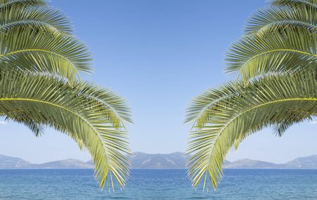 Palm tree branches over a blue sky Stock Photo