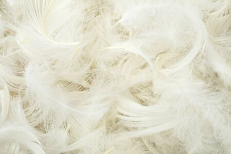 Pile of white feathers close up