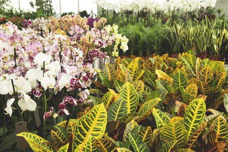 Colorful orchids in a green house Stock Photo