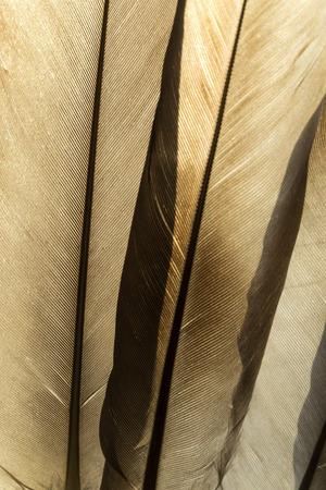Transparent feathers texture close up