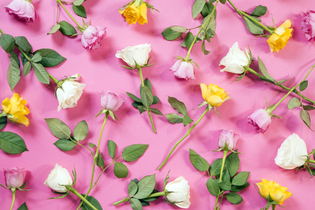 Colorful roses on pink background