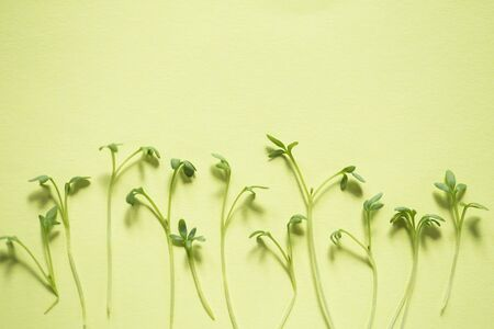 Watercress sprouts pattern on green background