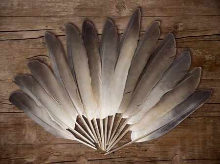Pigeon feathers on wooden  background