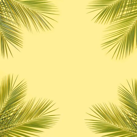 Green palm leaves on yellow background Reklamní fotografie