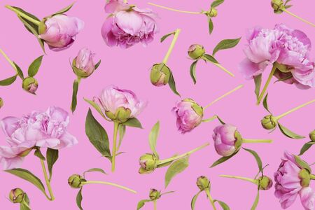 Pink peonies on pink background