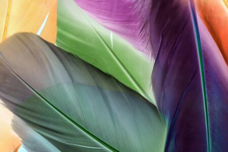 Colorful artificial feathers texture close up