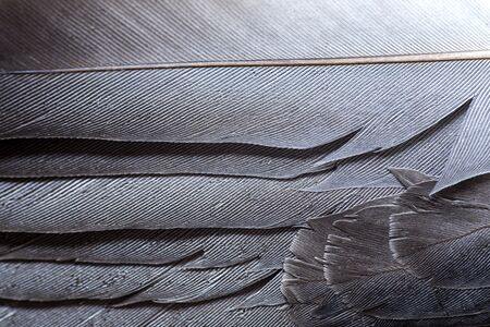 Gray feathers texture close up