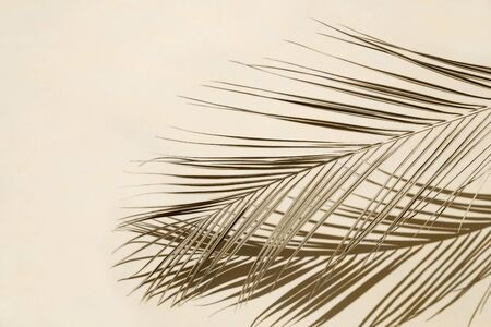 Palm leaf on beige pastel background Reklamní fotografie - 127668537