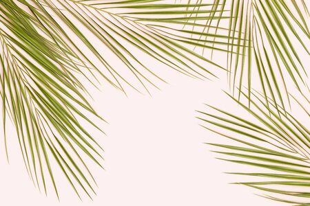 Palm leaf on pink pastel background