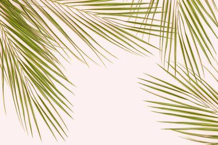 Palm leaf on pink pastel background Reklamní fotografie - 127668539