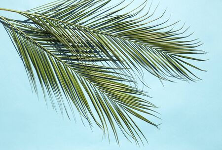 Palm leaves on blue background Reklamní fotografie