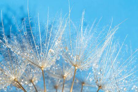 Dandelion close up over blue background Stockfoto - 130114934