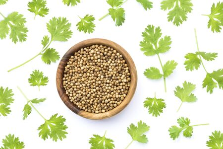 Coriander seeds and leaves on white background