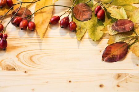 Wild roses fruit on wooden background