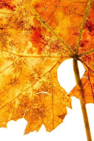 Dry autumn leaf as background Stok Fotoğraf