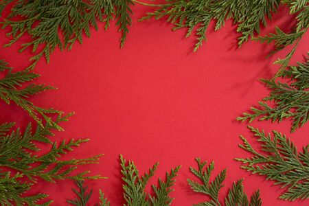 Cypress branches on red background