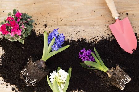 Spring flowers and soil on wooden background