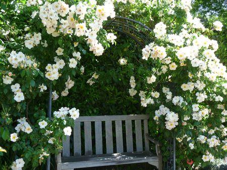 Tuin stoel  Stockfoto - 4886135