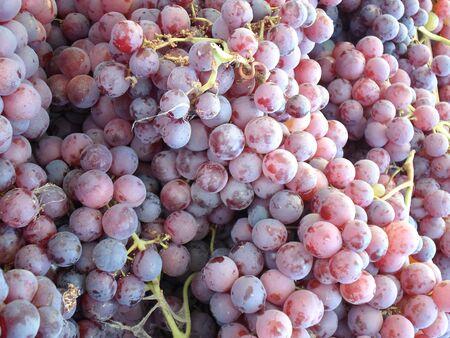 Verse druiven Stockfoto