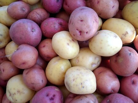 Purple and Yellow Potatoes photo