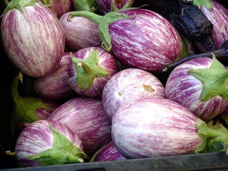 Eggplants Stock fotó