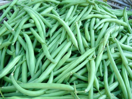 Fresh greeen beans Stock Photo - 15215475