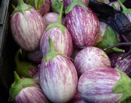 Purple Eggplant Stock fotó
