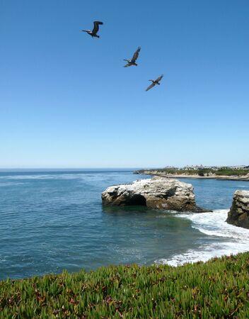 Birds flying over the ocean Stock fotó