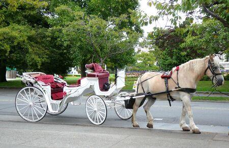 Paard en Vervoer